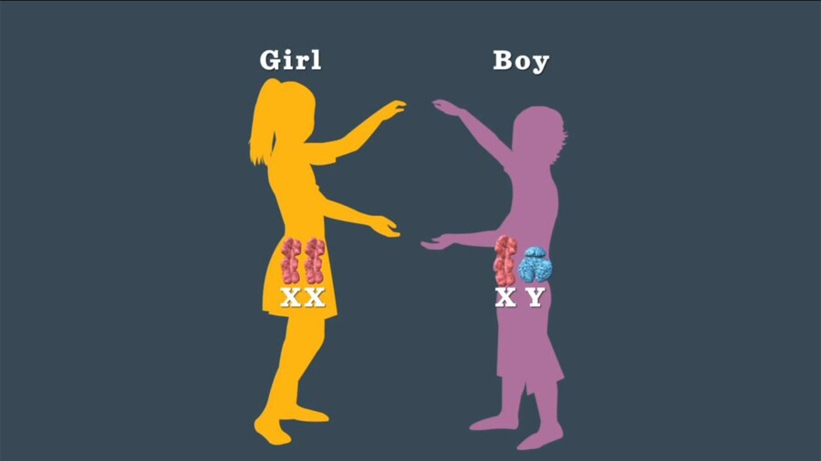 What Combination Of Chromosomes Leads To A Boy Or Girl